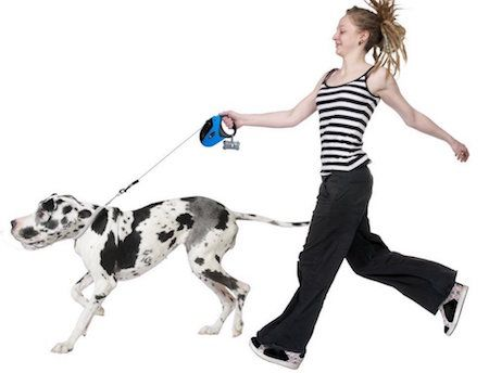 Best retractable dog leash